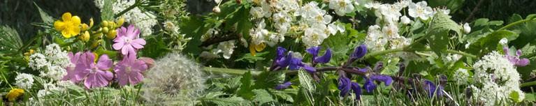 Pflanzenfamilien bestimmen - botanische Wanderung im Landkreis Fürstenfeldbruck
