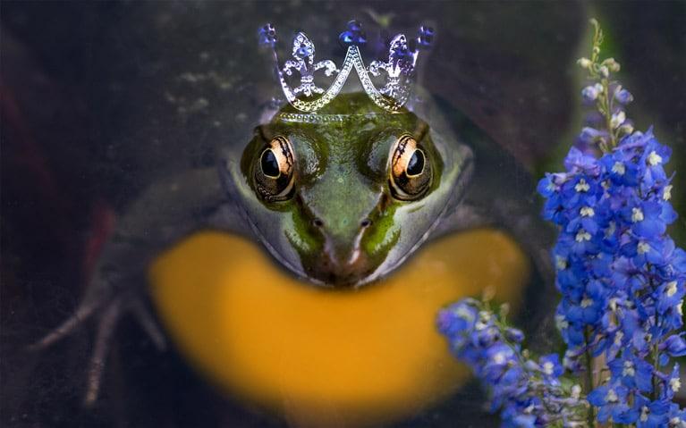 Homöopathischer Märchenabend - Staphisagria und Der Froschkönig